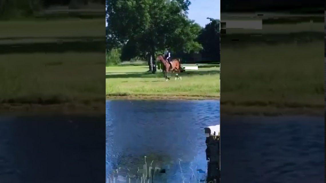 funny horse fail