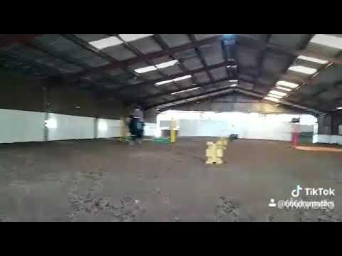 Cheval saute mais loupe