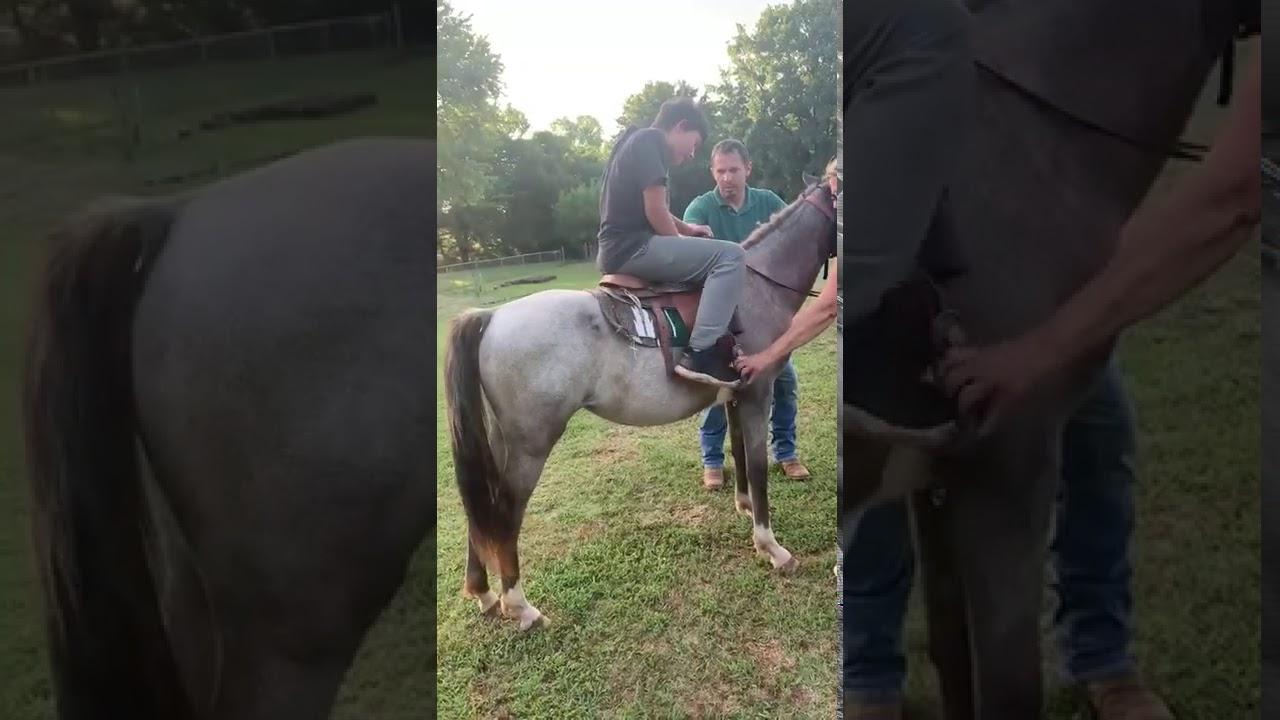Fail – equitation