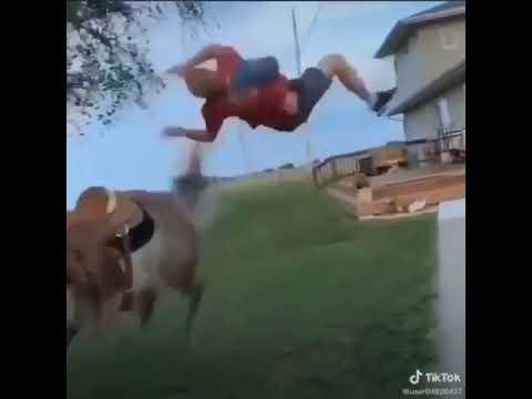 horse butt jump fail