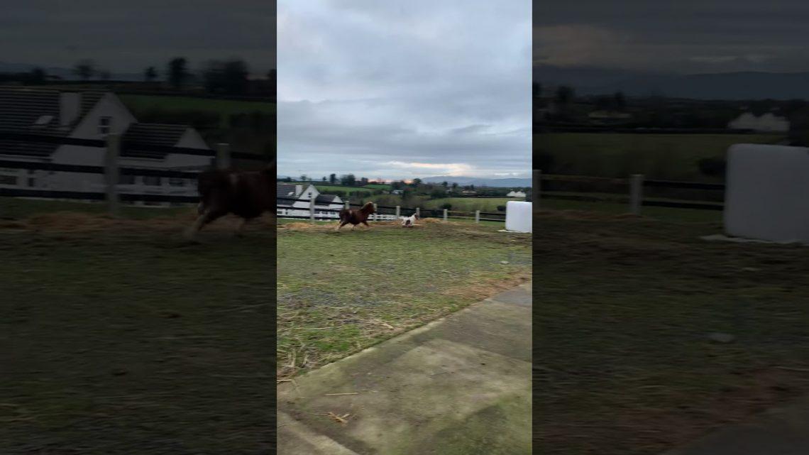 Échec du cheval!