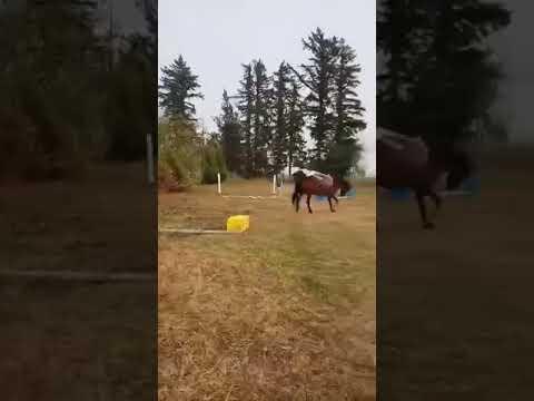 Horse riding fail!