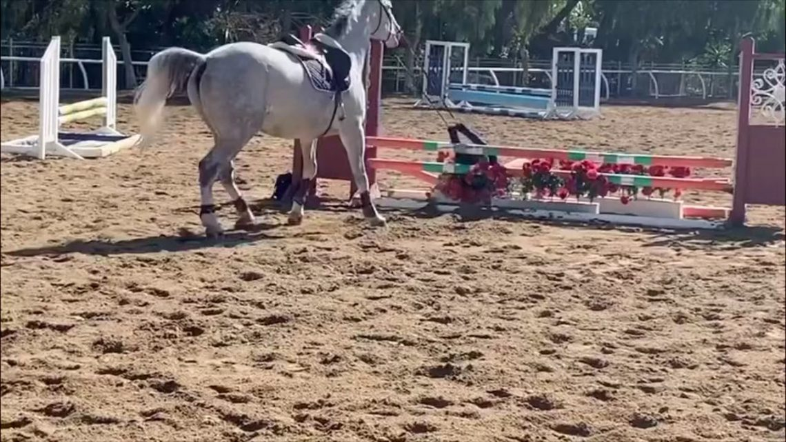 Horse fail compilation