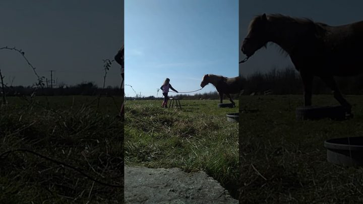A fail at trying to get pookie to jump. Loan horse jumping.