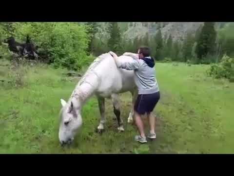 Angry horse fail