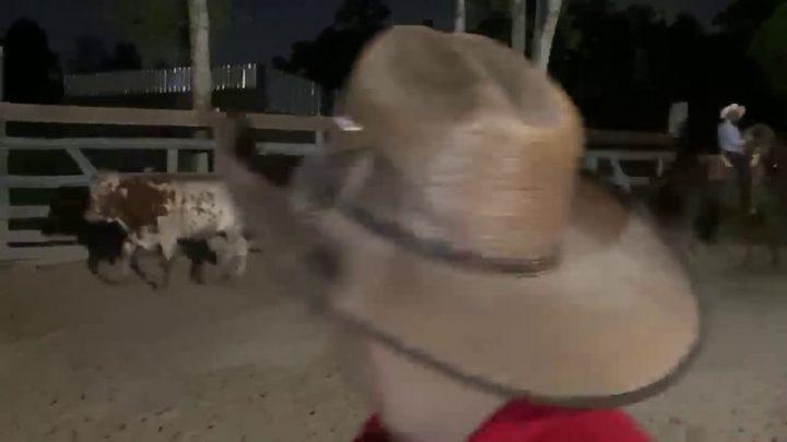 Bull riding fail