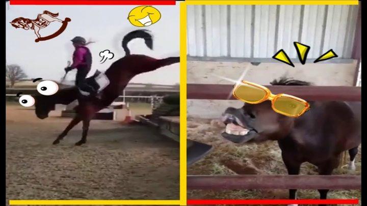 CABALLO LOCO !!  HUMOUR VIRAL |  chevaux drôles |  bloopers de caballos |  jinetes FAIL |  CHEVAUX FOLLES *