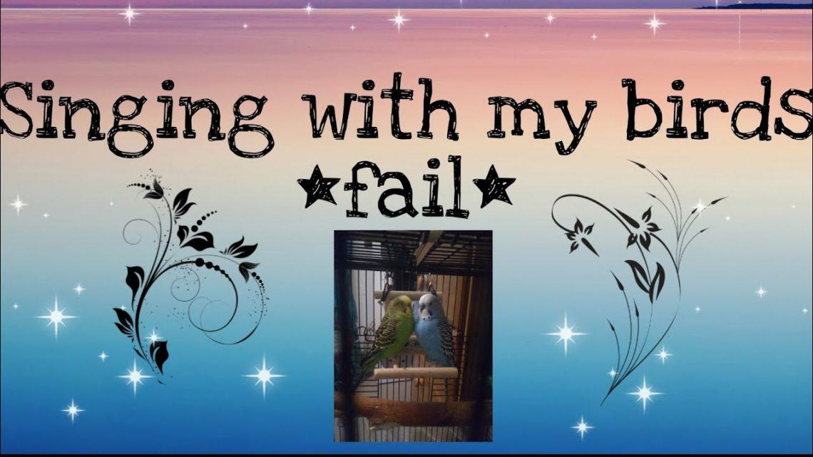 Chanter avec mes oiseaux * échouer lol * – Alayna la fille de cheval