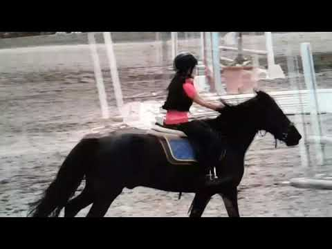 Disastrosa caduta da cavallo  |Horse Fail |