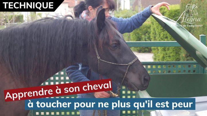 """[ EDUQUER SON CHEVAL 👀 ] Apprendre à son cheval à ne plus avoir peur avec le """"Touche"""""""