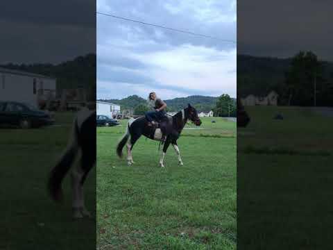 Échec de l'équitation * Remmie *
