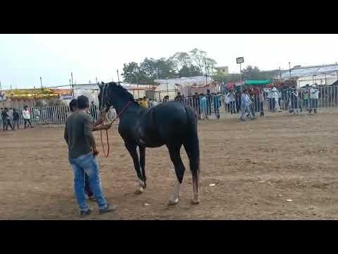 Échec de l'équitation 😝