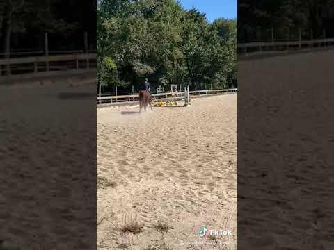 Échec d'équitation 😂 ||  EEquine
