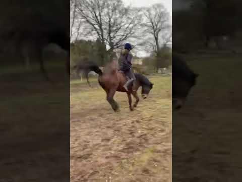 Échec du cheval 2020 ||  CELA MOI 🤣