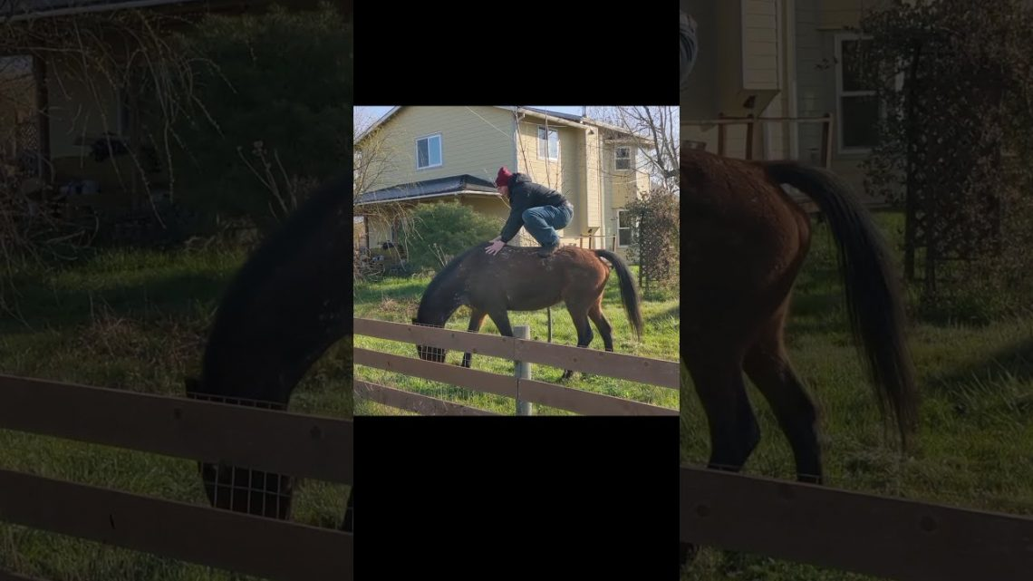 Échec du cheval papa (#Shorts)