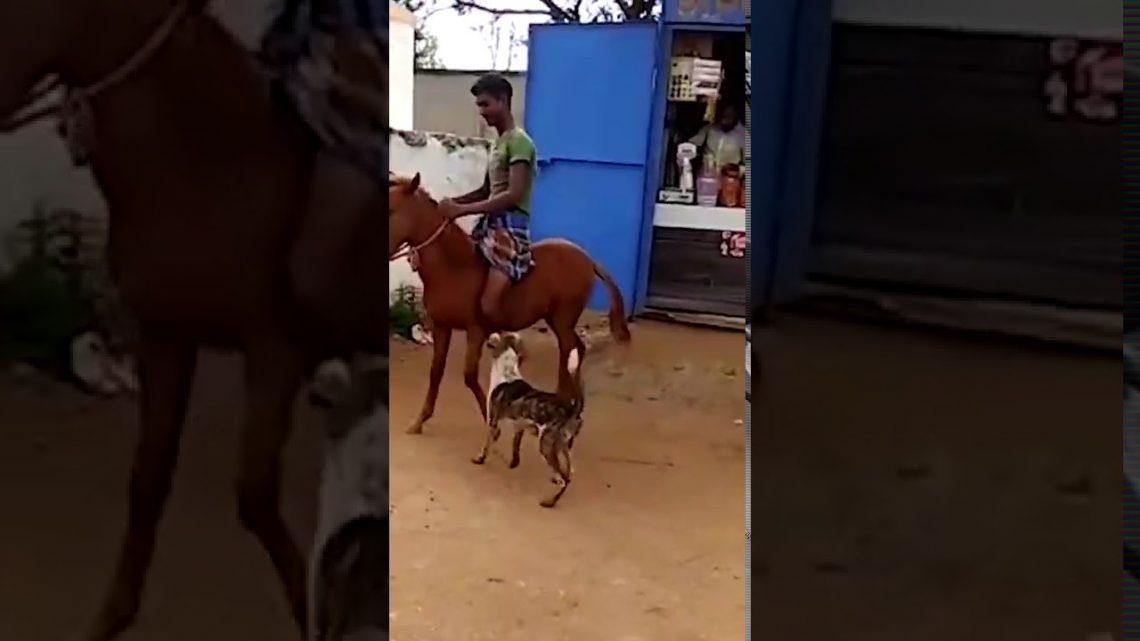 Équitation à cheval échoue 😂 s'abonner 😂