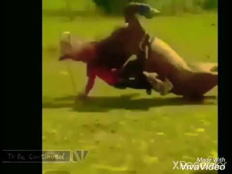 Horse backflip fail🤣😅