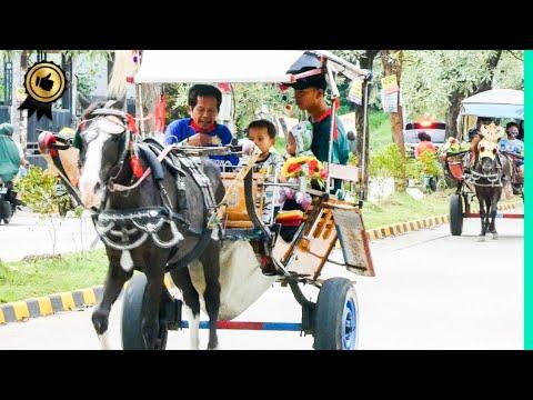 🐎 KUDA DELMAN TV 🔴 KUDA HORSE ANDONG DOKAR – WISATA KUDA TAMAN PERMATA CIKUNIR – Tukang Kuda Cikunir