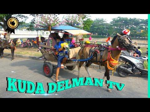 🐎 KUDA DELMAN TV 🔴 Naik Delman Cepat BKT, Cheval Dokar Andong
