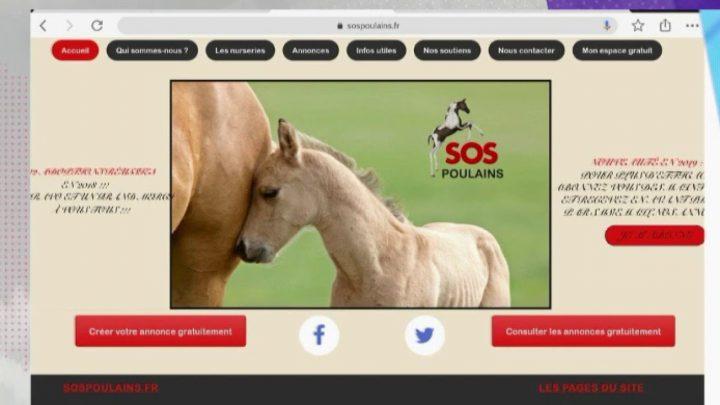 L'association du jour: SOS Poulains orphelins