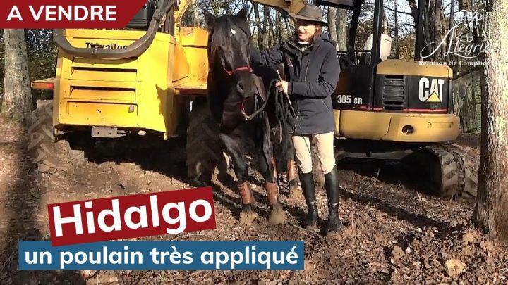 [ MERENS A VENDRE 🐴 ] Hidalgo, 3 ans – un poulain appliqué