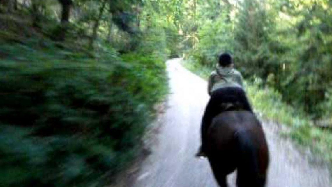 Pourquoi elle échoue sur le cheval? Sa position est décalée et ils galopent sur le béton