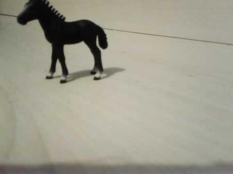 Presanté le poulain de la légende du cheval noir