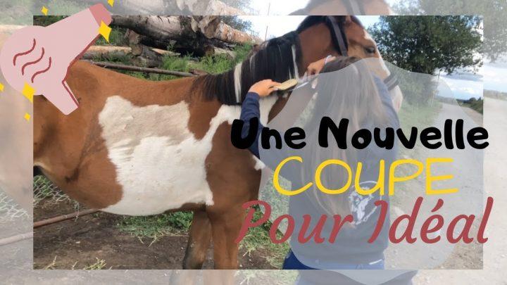 SOIN – 1ère COUPE des CRINS de mon poulain: je n'y arrive pas