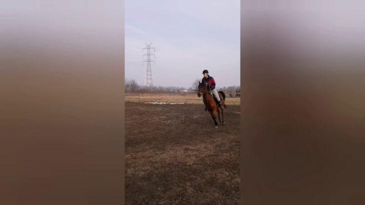 Skoki przez niskie przeszkody |  FAIL |  Équipe Kasha Horse