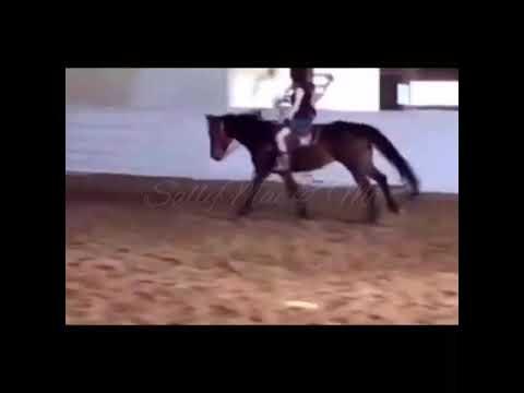 Un autre cheval court échoue .. ~ SallyMae & Me