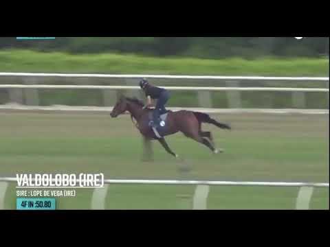 «Valdolobo» difficile à échouer dans la course 5 Gulfstream park 4/23