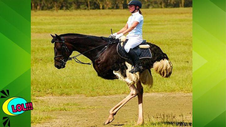 Vidéo De Risa 2020 !!  Monter à tort des chevaux coléreux |  Échec de l'équitation drôle #woafunny