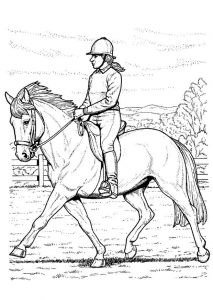 cahier de mandala cheval