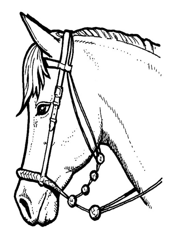 cheval dessin mandal