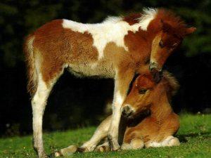 cheval mandala a colorier