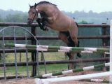 cheval mandala a colorier facile