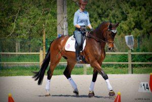 coloriage cheval de course