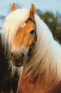 coloriage sur les chevaux