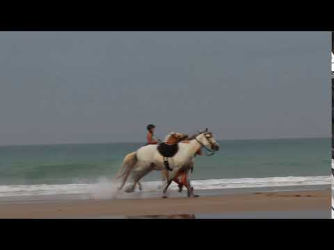 horse fail, falling at the beach