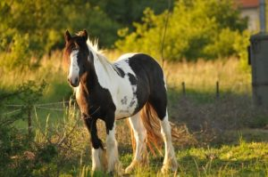 mandala de cheval difficile