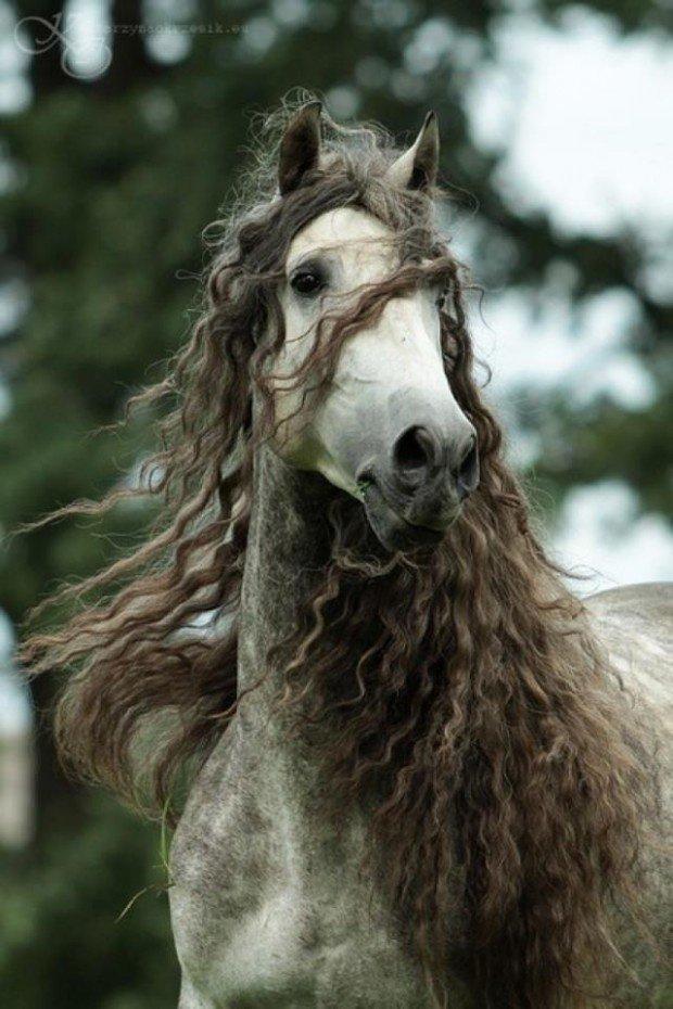 mandala sur les chevaux