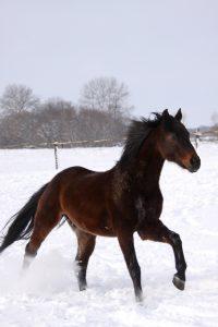 photo de cheval abstang