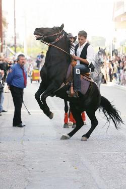 photo de cheval andravida - basse elide