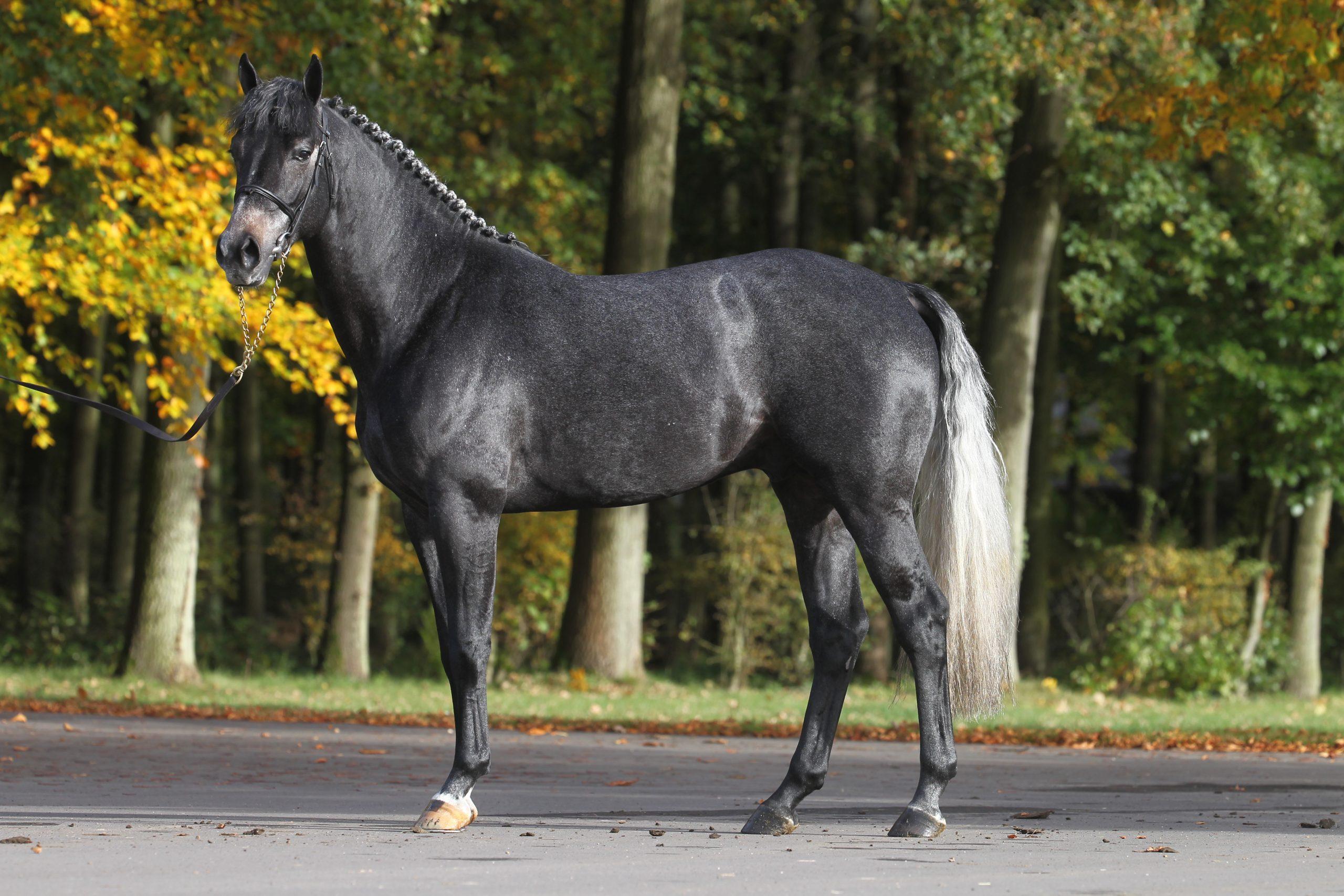 photo de cheval cukurova