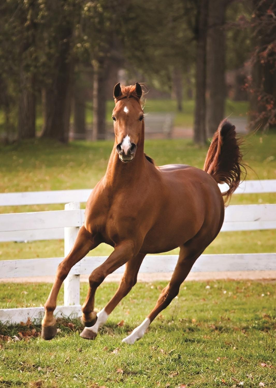 photo de cheval henson