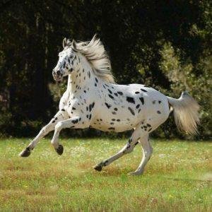 photo de cheval kirghiz