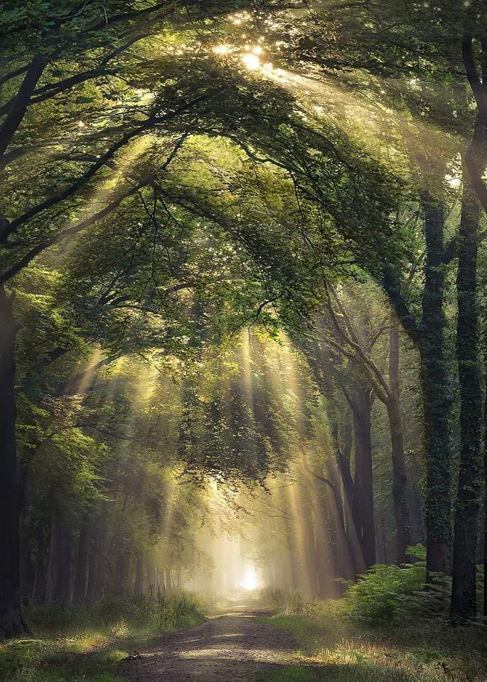 Photo De Cheval New Forest