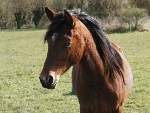 tete cheval mandala