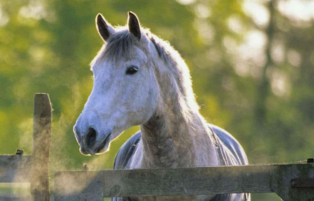 un coloriage de cheval