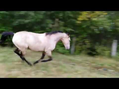 Школе Дарчи 4 года.  Традиционное видео Échec du cheval.